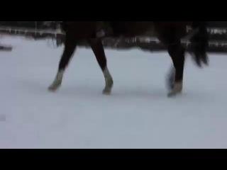 Видео из личного семейного архива. Зимняя прогулка на лошади.