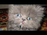 «Приколы про котов» под музыку Dj Грув - В мире животных ( ремикс ). Picrolla