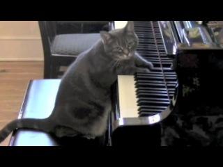 Знаменитая кошка Нора играет на пианино