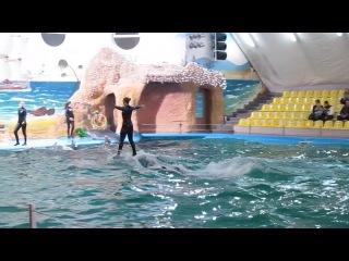 Дельфинарий Немо город Одесса Часть 1