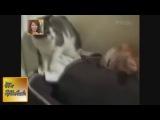 Самые смешные приколы с кошками, собаками. Смешные видео с животными (2013) -- August 2013