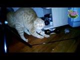 Кот и букет - прикольное видео (из коллекции А знаешь что...)