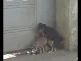 Собака трахает кота который трахает кошку)))