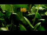 G.Ventura( sax) - Adieu Pour Un Cloun
