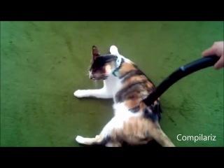 Коты и пылесосы. Дружба или ненависть-_HD