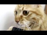 Кошка прикольно лижет трубку от пылесоса