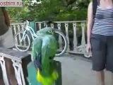 попугай смеётся и разговаривает с туристами