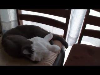 Котаяц