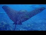 Морская лагуна, красивые рыбки и космическая музыка.