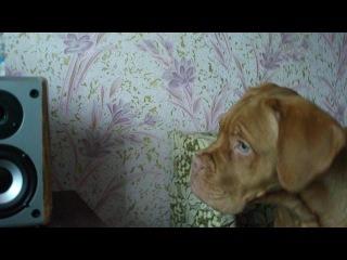 бордосик смотрит видео про себя 4 мес