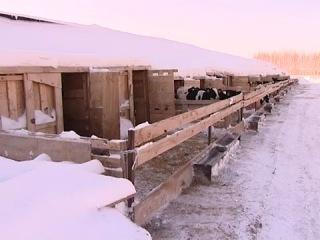 Робото-ферма. Апастово, Татарстан (2011).mp4
