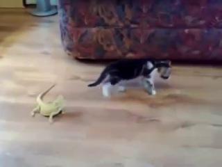 Котёнок и ящерицы(неожиданно).