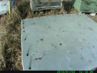 Очистительный облет пчелы после зимовки 14.02 2014 г.