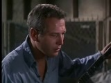 Paul Newman - Cool Hand Luke -