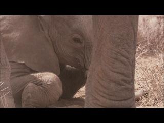 BBC Африка / Africa 02. Саванна (2013) HD