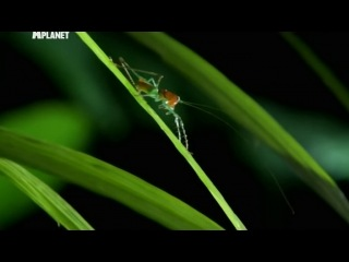 Войны жуков гигантов 11 серия (Monster bug wars)