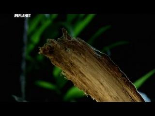 Войны жуков-гигантов 2. 5 серия / Monster bug wars 2 (2012)