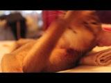 Abyssinian cat/абиссинская кошка
