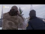 Пума против волка / Cougar vs Wolf / 2013