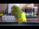 Говорящий попугай ты чё?