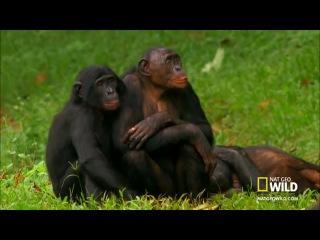 Crazy monkey sex