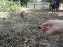 Крупные обезьяны на военном пляже НАТО-с рук берёт банан