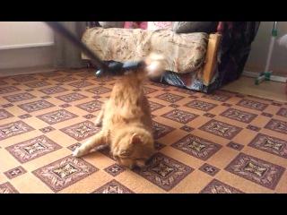 Мой кот, у которого все наоборот))
