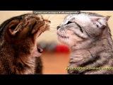 «Со стены друга» под музыку     [❤]Кошки и коты - Кошачье мяуканье под аккорды гитары. Picrolla