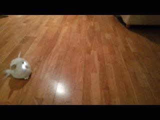Джек Рассел против Furby, Ферби Краснодар +7 909 45 85 369