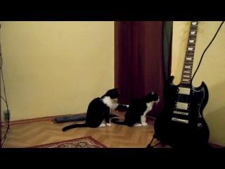 котик просит прощения