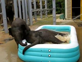 Слонам тоже надо купаться