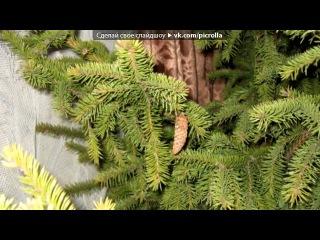 «Срубили нашу елочку...» под музыку Несчастный случай - с 1 и по 13-е Новогодняя!!!!!!!. Picrolla