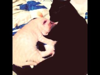 Шаби и Лео