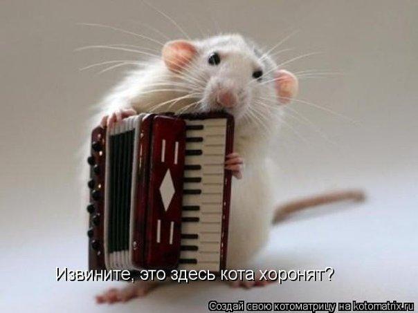 http://cs534.vkontakte.ru/u43692401/101261245/x_223d1fa9.jpg
