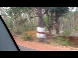 Индия Гоа дорога домой