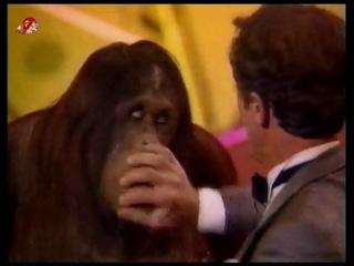Шоу с участием обезьян.Старое,доброе видео.