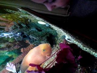 Сонька целуется с рыбкой
