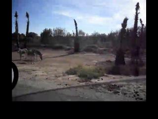 Sigean Африканский резервный зоопарк