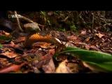National Geographic: Загадки королевской кобры