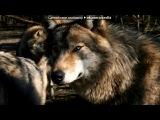 «Со стены Волк - Одиночка» под музыку суперская песня - из сумерок.... Picrolla