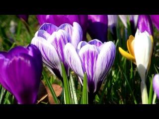 Beautiful Nature - Spring  HD