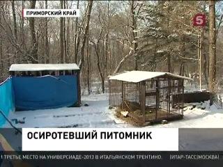В Приморском крае отстреливают ручных медведей