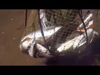 Неудачный рыбак упустил всю рыбу. (жерех, щука, окунь.) угар XD лол