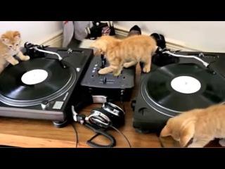 Cats djs ;)