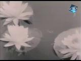 Урок 18 - Микола Кондратюк - Перед концертом (Укртелефльм, 1973)