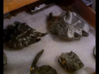 BBC: Прогулки с динозаврами. Баллада о большом Але 2-я часть.