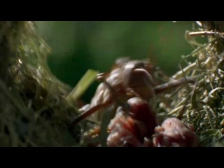 BBC: Африка / BBC: Africa / 1 серия из 6 (2013) HD