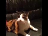 Vine Говорящий кот ойойойойой