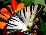 очень красивые бабочки