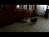 Собачки и кот))
